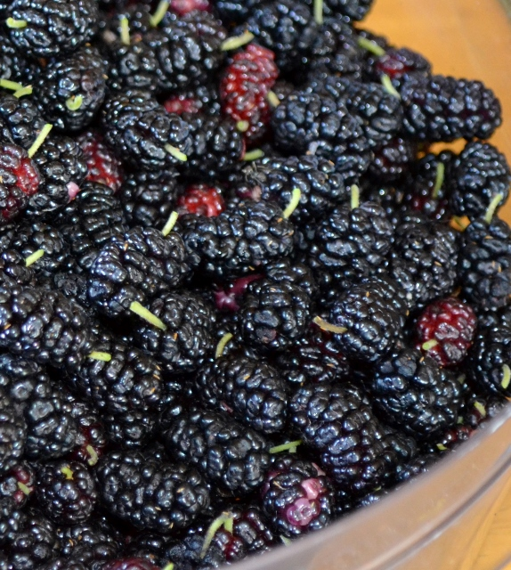 Mulberries in a bowl with stems